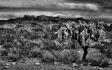 Beware the Cholla by snapshooter87, photography->landscape gallery