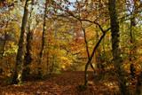 Golden Days by biffobear, photography->landscape gallery