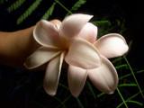 Frangipangi by theme_of_paganini, Photography->Flowers gallery