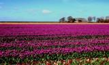 Colorful Emma Polder by rozem061, photography->landscape gallery