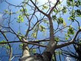 God's Silent Beauty by plantprincess, photography->nature gallery