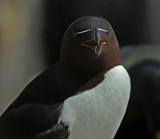 Head on by biffobear, photography->birds gallery