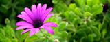 Purple Flower by nigel_inglis, Photography->Flowers gallery