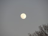 Moon 12-9-11 by ccmerino, photography->skies gallery