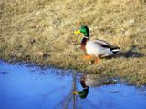 Vanity by kidder, Photography->Birds gallery