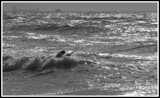 Surf's Up! by Corconia, Photography->Action or Motion gallery