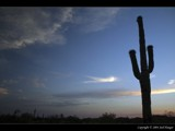 Cactus Silhouette by Delusionist, Photography->Sunset/Rise gallery