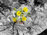 A dash of yellow.... by sunshiney1, Photography->Flowers gallery