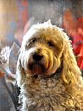Fritz by JaiJoli, photography->pets gallery