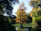 Fall in the Duck Pond by Anita54, Photography->Landscape gallery