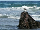 Sea. Rock. Bird. by Si, Photography->Shorelines gallery