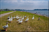 Waiting For The Ferry To Come by corngrowth, photography->birds gallery