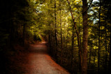 Hemlock Trail 8 by Eubeen, photography->landscape gallery