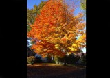Beauty Fall by Paparelli, photography->landscape gallery