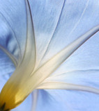 Blue Canopy by Tomeast, photography->flowers gallery