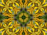 Kōwhai Kaleidoscope by LynEve, photography->manipulation gallery
