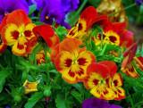 Just a few by biffobear, photography->flowers gallery