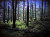 By the Strength of the Root and the Virtue of Moss by Pjsee16, photography->landscape gallery