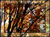 Fall Leaves by thebitchyboss, Photography->Landscape gallery