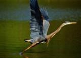 See Ya' by SatCom, Photography->Birds gallery