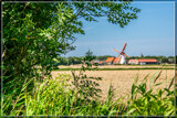 Ripening Wheat 2 by corngrowth, photography->landscape gallery