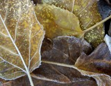 Leaves 1 by gerryp, Photography->Macro gallery