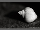 Shell by pom1, Photography->Nature gallery