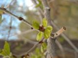 Image: A Trees Hidden Beauty