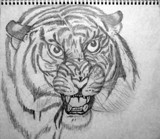 Tiger sketch by whammy, illustrations gallery