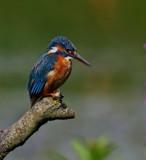 Bird on a stick by biffobear, photography->birds gallery
