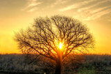 Tree of Light by imbusion, photography->sunset/rise gallery