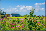 Dutch Landscape by corngrowth, photography->landscape gallery