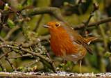 Rocking by biffobear, photography->birds gallery