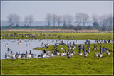 Temporary Stop by corngrowth, photography->birds gallery