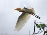Chasing Chicks. by trisbert, Photography->Birds gallery