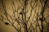 Blackbirds by Eubeen, photography->birds gallery