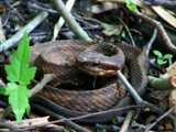 Killer Fellow by regmar, Photography->Reptiles/amphibians gallery