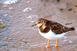 Little Visitor To The Marine Lake by braces, Photography->Birds gallery