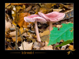 in the woods # 4 by kodo34, Photography->Mushrooms gallery