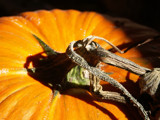 Halloween's Almost Here by camerahound, Holidays gallery