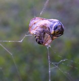 All wrapped up and no place to go by sunny184, photography->insects/spiders gallery
