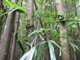Bamboo Forest by Buffalojim, Photography->Nature gallery