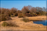 'Wint'ry Toned' Marsh by corngrowth, photography->landscape gallery