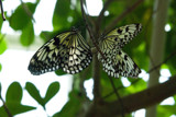 Love is in the Air by wheedance, Photography->Butterflies gallery