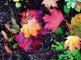 A microcosm of Fall by gr8fulted, Photography->Nature gallery