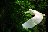 Desktop Flyer by 100k_xle, photography->birds gallery