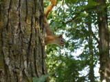 Red'll have you treed 'fore the mornin' comes by Rayn_dragon, Photography->Animals gallery