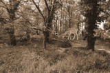 Forest Scene by Ramad, contests->b/w challenge gallery