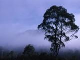 Misty mountain by captk2071, Photography->Landscape gallery