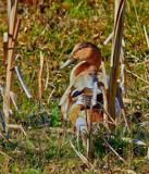 Hybrid by biffobear, photography->birds gallery